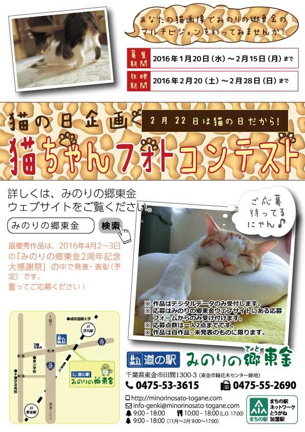 2016猫ちゃんフォトコンテスト