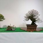 甲州野梅展示風景