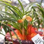 2017古典植物04