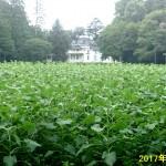 H290809_himawari01